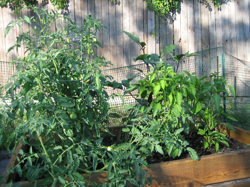 Container gardening in Florida