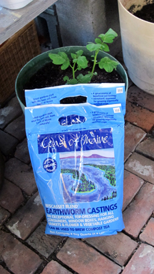 Worm castings plant fertilizer